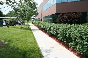 row of bushes near commercial building