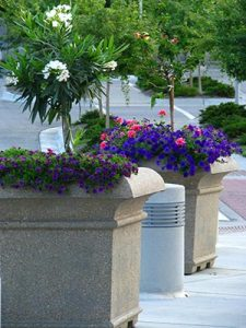 two planters of flowers