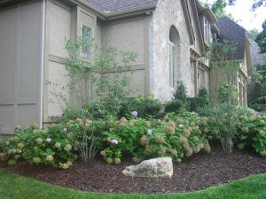 garden in front of residential home