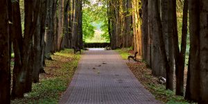 sidewalk path with trees and bench