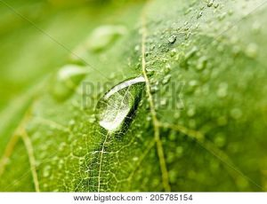 leaf with water droplet