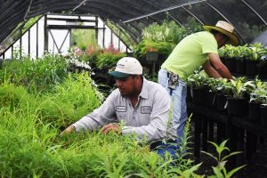 landscaping experts in the greenhouse