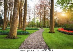 garden path with flowers and trees
