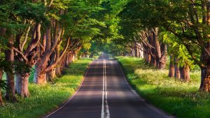 road path with trees on each side