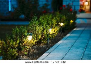 trees with lights and path