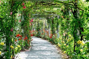terrace of hanging flowers